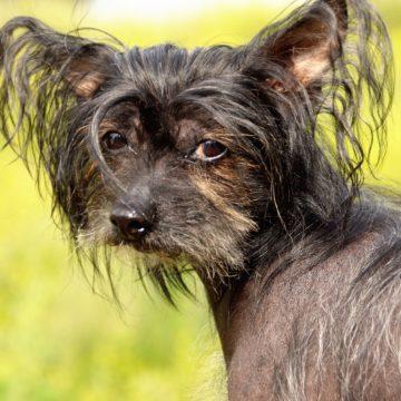 ¿Qué perro debes elegir según tu signo del Zodiaco?