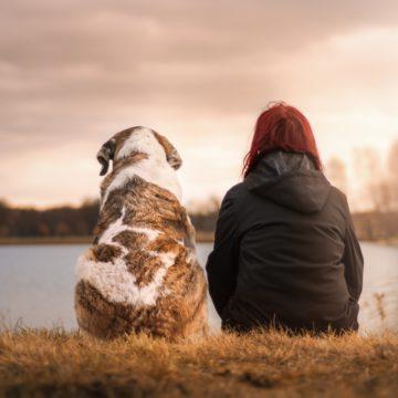 Las mascotas Preferidas por los signos de Tierra